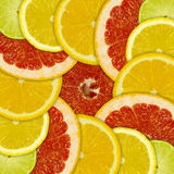 Abstract background of different citrus fruits Stock Images