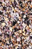 Seashell background vietnam beach tropical Stock Photo