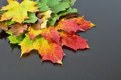 Abstract background of differently colored maple leaves. Magical autumn colors. Royalty Free Stock Photos