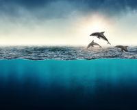 Abstract background with dolphins royalty free stock image
