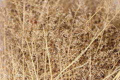 Abstract background of dried wildflowers, soft focus Stock Photos
