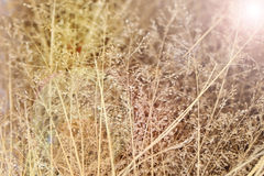 Abstract background of dried wildflowers in sunlight, soft focus Stock Image