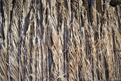 Abstract background of dry palm branches. Stock Photography