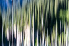 Abstract background of empty trees blurred Stock Images