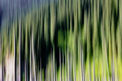 Abstract background of empty trees blurred Royalty Free Stock Image