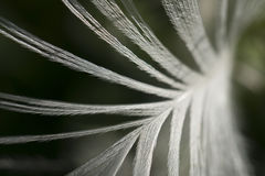 Abstract background of a feather. Feather close up with a nice bokeh Royalty Free Stock Photography
