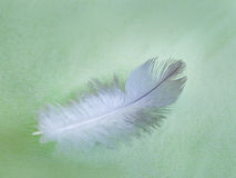 Abstract background feathers Stock Images