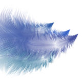 Abstract background with feathers. Abstract background with blue feathers. Eps10 Stock Photos