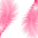 Abstract background with feathers. Abstract background with pink feathers. Eps10 Royalty Free Stock Images