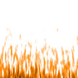 Abstract background. Flame on white. Royalty Free Stock Images