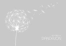 Abstract background with  flower dandelion Stock Images