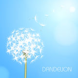 Abstract background with  flower dandelion Royalty Free Stock Images