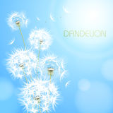 Abstract background with  flower dandelion Stock Photography