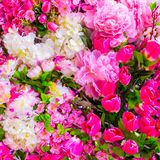 Abstract background of flowers Close-up Stock Photos