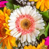 Abstract background of flowers Royalty Free Stock Photos