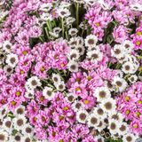 Abstract background of flowers Stock Photography