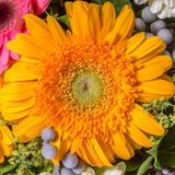 Abstract background of flowers Royalty Free Stock Photography