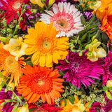 Abstract background of flowers Royalty Free Stock Photo