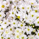 Abstract background of flowers Royalty Free Stock Image