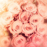 Abstract background of flowers. Close-up Royalty Free Stock Photo