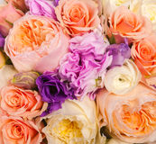 Abstract background of flowers. Close-up Royalty Free Stock Images