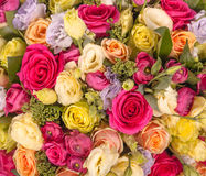 Abstract background of flowers. Close-up Royalty Free Stock Image