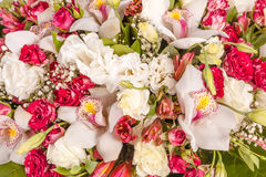 Abstract background of flowers. Close-up Stock Image