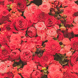 Abstract background of flowers. Close-up Stock Images