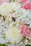 Abstract background of flowers. Close-up floral wedding backdrop Royalty Free Stock Photos