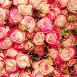 Abstract background of flowers. Close-up. Stock Photos