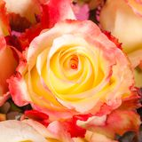 Abstract background of flowers. Close-up. Royalty Free Stock Photos