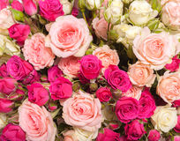 Abstract background of flowers. Close-up. Stock Images