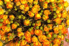 Abstract background of flowers. Close-up. Royalty Free Stock Photography