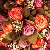 Abstract background of flowers. Close-up. Royalty Free Stock Images