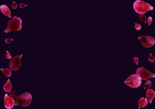 Abstract background with flying pink, red rose petals. Stock Images