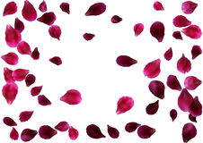 Abstract background with flying pink, red rose petals Stock Image