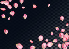 Abstract background with flying pink rose petals. Stock Image