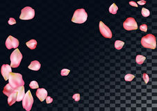 Abstract background with flying pink rose petals. Royalty Free Stock Photo