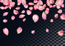 Abstract background with flying pink rose petals. Stock Photo