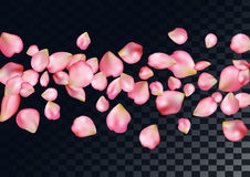 Abstract background with flying pink rose petals. Royalty Free Stock Images