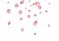 Abstract background with flying pink rose petals. Stock Photography