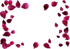 Abstract background with flying pink rose petals. Vector illustration isolated on a background. Royalty Free Stock Image