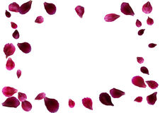 Abstract background with flying pink rose petals. Vector illustration isolated on a background. Stock Photo