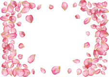 Abstract background with flying pink rose petals. Stock Images