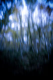 Abstract background forest Royalty Free Stock Photo