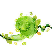 Abstract background with fresh green leaves Royalty Free Stock Images