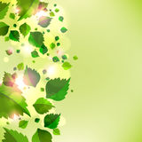 Abstract background with fresh green leaves. Vector Stock Illustration