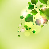 Abstract background with fresh green leaves. Vector Vector Illustration