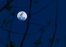 Abstract background. full moon. Royalty Free Stock Photography