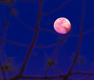 Abstract background. full moon. Stock Photo